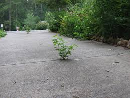 trees gowing on concrete